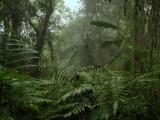 Экстрим в Амазонии