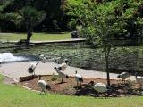 Ботанический сад в Брисбене
