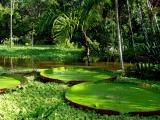 Испытание себя в Амазонии